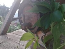 un baril de vin se tient sur un banc en bois image libre de droits