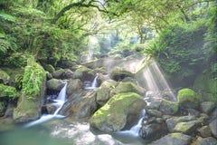 Un barranco misterioso del bosque enorme y de la restauración conecta en cascada con la luz del sol que brilla a través del verdo foto de archivo libre de regalías