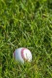 Un baseball bianco sull'erba verde fresca fotografia stock