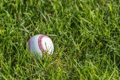 Un baseball bianco sull'erba verde fresca immagini stock libere da diritti