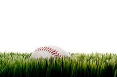 Un baseball su erba alta su bianco con la copia immagine stock libera da diritti