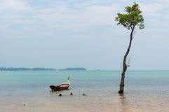 Un bateau de longtail dans l'océan à côté d'un arbre grand Photos libres de droits
