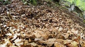 Un beagle que se cava en la pila de árbol caido se va metrajes