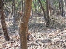 Un beau cerf commun repéré dans la jungle photographie stock libre de droits