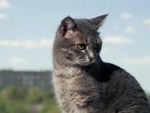 Un beau chat aux yeux verts gris avec les rayures noires et blanches se repose sur le rebord de fen?tre et regarde ? partir du image stock