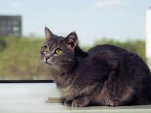 Un beau chat aux yeux verts gris avec les rayures noires et blanches se trouve sur le rebord de fen?tre et regarde ? partir du photographie stock
