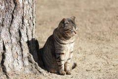 Un beau chat dans le château de Himeji Images libres de droits