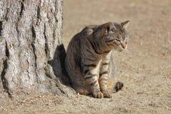 Un beau chat dans le château de Himeji Photographie stock libre de droits