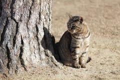 Un beau chat dans le château de Himeji Photos libres de droits