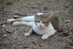 Un beau chat ?gar? photo stock