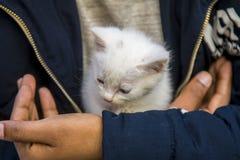 Un beau chaton blanc joue avec un garçon Image stock