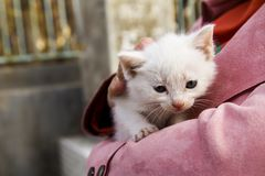Un beau chaton se sent chaud à l'intérieur d'une veste du ` s de femmes Photo libre de droits