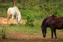 Un beau cheval Photos libres de droits