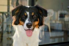 Un beau chien affectueux I Photo libre de droits