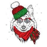 Un beau chiot dans un chapeau et une écharpe d'hiver Chien de pure race colley illustration de vecteur