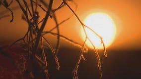 Un beau coucher du soleil banque de vidéos