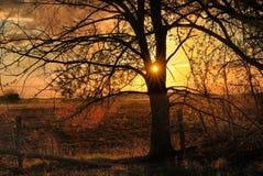 Un beau coucher du soleil et un arbre avec les branches dispersées images stock