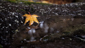 Un beau fond d'automne avec la feuille en baisse Image libre de droits