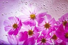 Un beau fond floral des pétales de fleur photo libre de droits