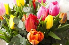 Beau groupe de tulipes néerlandaises Photos libres de droits