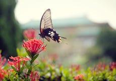 Un beau guindineau sur une belle fleur Photos libres de droits