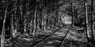 Un beau jour pour une promenade au soleil Photo libre de droits