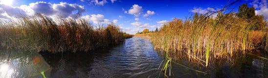 Un beau lac par les roseaux Image stock