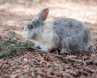 Un beau lapin Photos stock