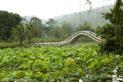 Un beau lotus dans la campagne de la Chine Photo libre de droits