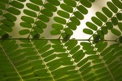 Un beau modèle de feuille de couleur verte avec le fond vert photo stock