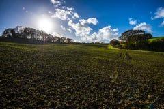Un beau panorama de nouvelles cultures sur des terres cultivables en vallée de Combe, le Sussex est, Angleterre photos libres de droits