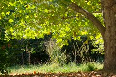 Un beau parc vif avec l'arbre vert, fin  photos libres de droits