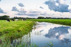 Un beau paysage parmi les exploitations laitières néerlandaises Images libres de droits