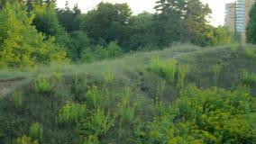 Un beau paysage vert des arbres et de l'herbe le soir banque de vidéos
