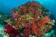 Un beau récif vibrant vivant avec des poissons Image stock