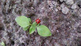 Un beau scarabée qui se repose sur une feuille Photos libres de droits