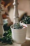 Un beau succulent de rosette planté dans le pot blanc rond Photos stock