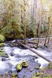 Un beau tir d'une rivière dans une forêt photographie stock