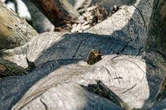 Un beau vieil arbre mort photo stock