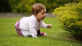 Un bebé alegre se está sentando en la hierba verde cerca del arbusto en el parque de la ciudad almacen de video