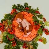 Un bebé recién nacido hermoso está durmiendo en una cesta con las bayas de la ceniza de montaña imágenes de archivo libres de regalías