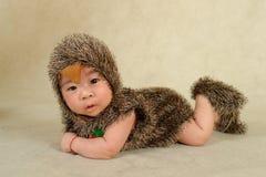 Un bebé tiene gusto del erizo Foto de archivo libre de regalías