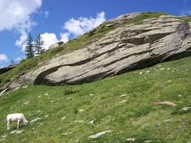 Un becerro blanco en las montañas acerca a Prali Imágenes de archivo libres de regalías