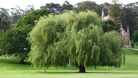 Un bel arbre en Tasmanie Image libre de droits