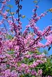 Un bel arbre a fleuri dans le jardin, ressort photo libre de droits