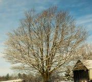 Un bello acero nevoso Fotografia Stock