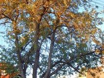 Un bello albero fotografia stock