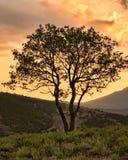 Un bello albero asciutto ripete la forma delle montagne Montagne della Crimea Bello tramonto rosso Fotografie Stock Libere da Diritti