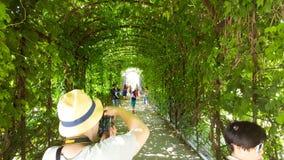 Un bello arco di vegetazione nel castello di Schönbrunn fa il giardinaggio a Vienna con la gente fotografia stock