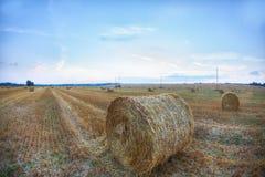 Un bello campo dorato con i mucchi di fieno rotolati su una nuvola graziosa Fotografia Stock